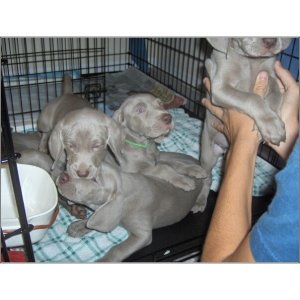 Casey's pups